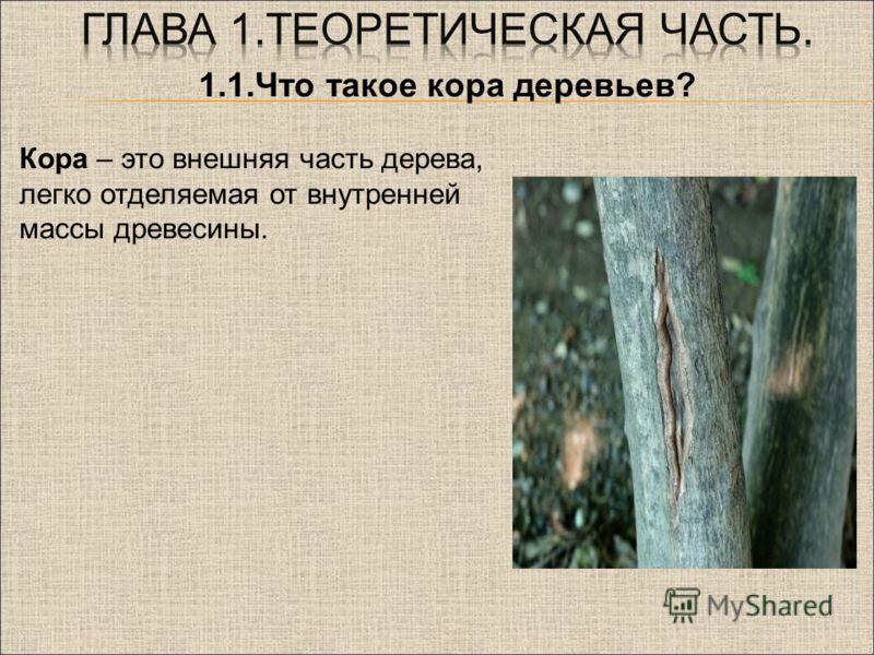 1.1.Что такое кора деревьев? Кора – это внешняя часть дерева, легко отделяемая от внутренней массы древесины.