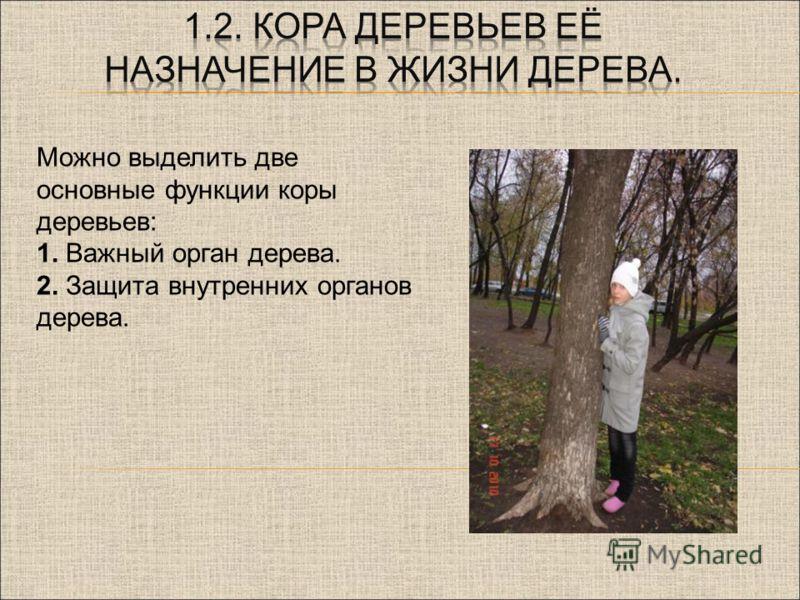 Можно выделить две основные функции коры деревьев: 1. Важный орган дерева. 2. Защита внутренних органов дерева.