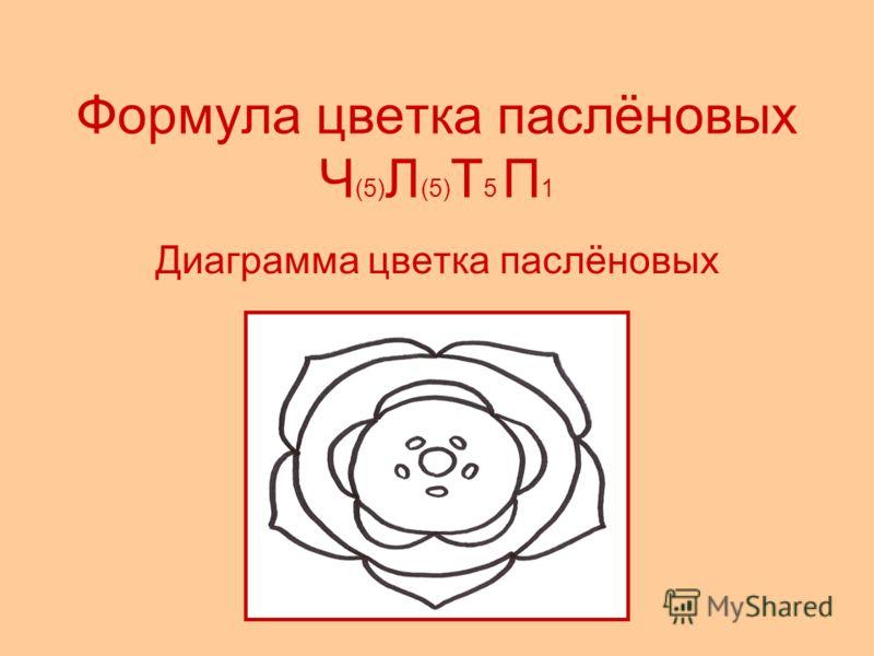 Формула цветка паслёновых Ч (5) Л (5) Т 5 П 1 Диаграмма цветка паслёновых
