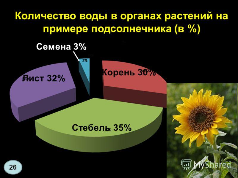 Количество воды в органах растений на примере подсолнечника (в %) 26 Стебель 35% Лист 32% Корень 30% Семена 3%