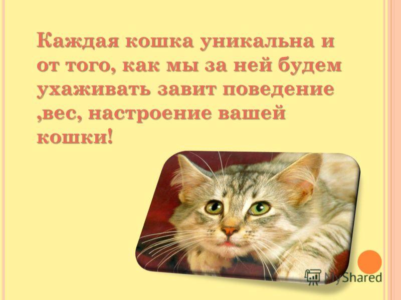 Каждая кошка уникальна и от того, как мы за ней будем ухаживать завит поведение,вес, настроение вашей кошки! Каждая кошка уникальна и от того, как мы за ней будем ухаживать завит поведение,вес, настроение вашей кошки!