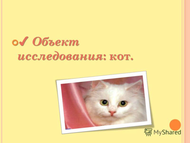 Объект исследования : кот. Объект исследования : кот.