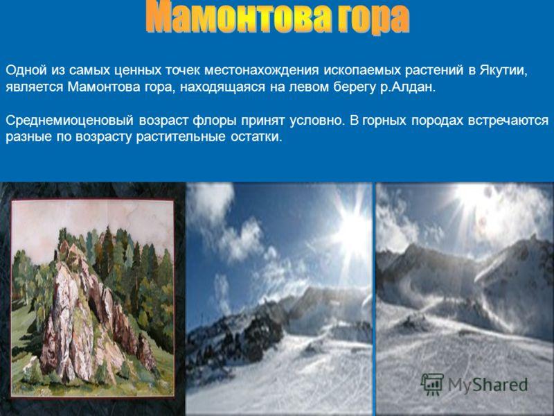 Одной из самых ценных точек местонахождения ископаемых растений в Якутии, является Мамонтова гора, находящаяся на левом берегу р.Алдан. Среднемиоценовый возраст флоры принят условно. В горных породах встречаются разные по возрасту растительные остатк