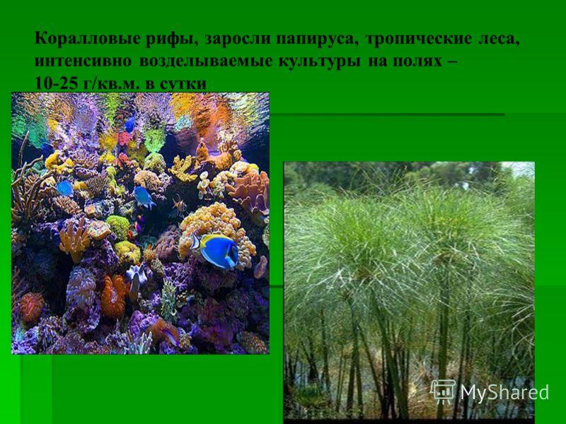 Коралловые рифы, заросли