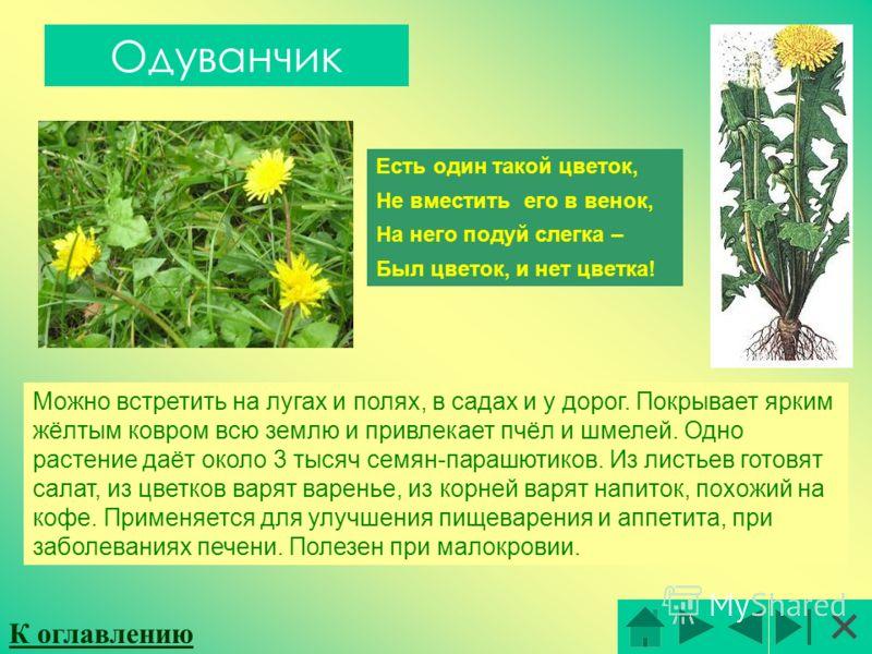 Одуванчик Есть один такой цветок, Не вместить его в венок, На него подуй слегка – Был цветок, и нет цветка! Можно встретить на лугах и полях, в садах и у дорог. Покрывает ярким жёлтым ковром всю землю и привлекает пчёл и шмелей. Одно растение даёт ок