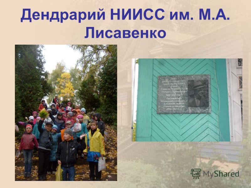 Дендрарий НИИСС им. М.А. Лисавенко