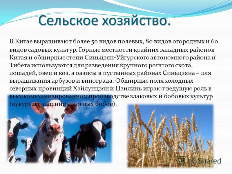 Сельское хозяйство. В Китае выращивают более 50 видов полевых, 80 видов огородных и 60 видов садовых культур. Горные местности крайних западных районов Китая и обширные степи Синьцзян-Уйгурского автономного района и Тибета используются для разведения