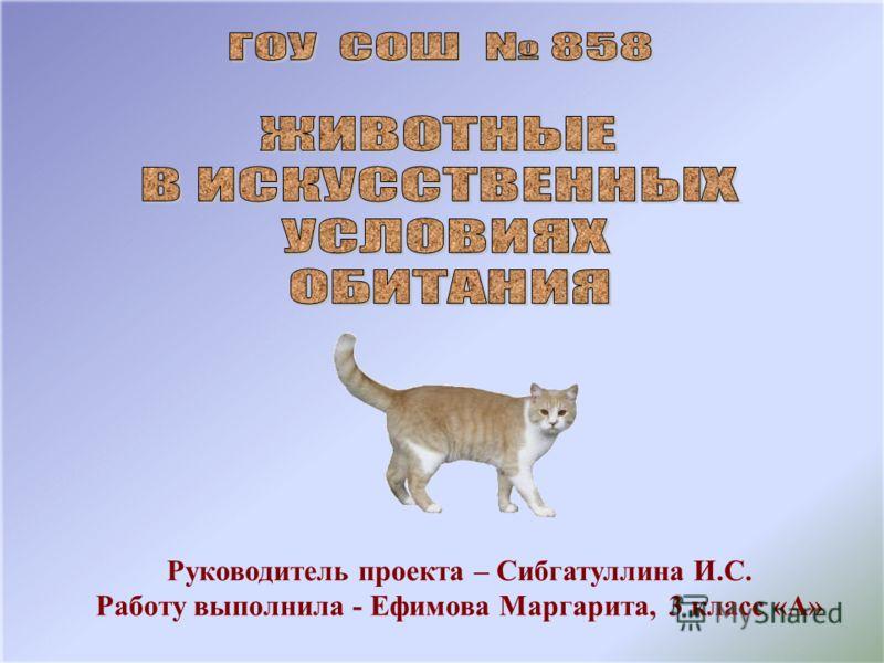 Руководитель проекта – Сибгатуллина И.С. Работу выполнила - Ефимова Маргарита, 3 класс «А»