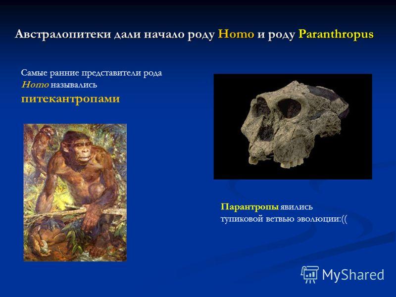 Австралопитеки дали начало роду Homo и роду Paranthropus Самые ранние представители рода Homo назывались питекантропами Парантропы явились тупиковой ветвью эволюции:((