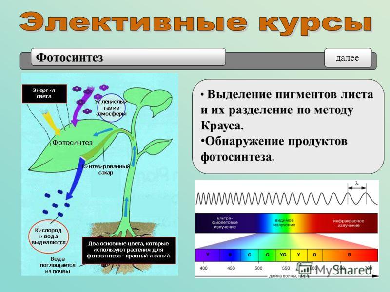 Выделение пигментов листа и их разделение по методу Крауса. Обнаружение продуктов фотосинтеза. Фотосинтез далее