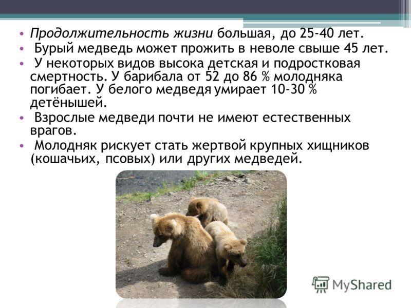 Продолжительность жизни большая, до 25-40 лет. Бурый медведь может прожить в неволе свыше 45 лет. У некоторых видов высока детская и подростковая смер