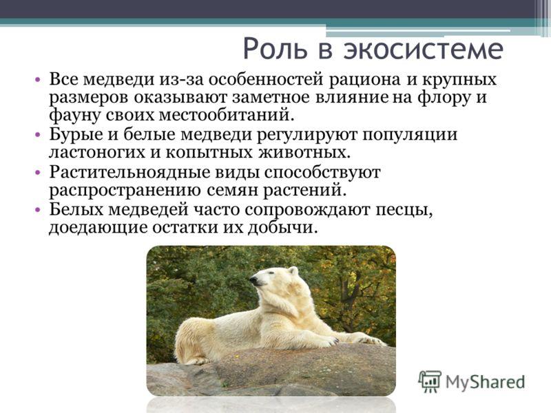 Роль в экосистеме Все медведи из-за особенностей рациона и крупных размеров оказывают заметное влияние на флору и фауну своих местообитаний. Бурые и б