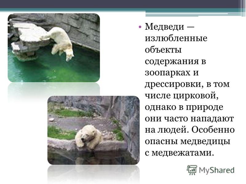 Медведи излюбленные объекты содержания в зоопарках и дрессировки, в том числе цирковой, однако в природе они часто нападают на людей. Особенно опасны медведицы с медвежатами.