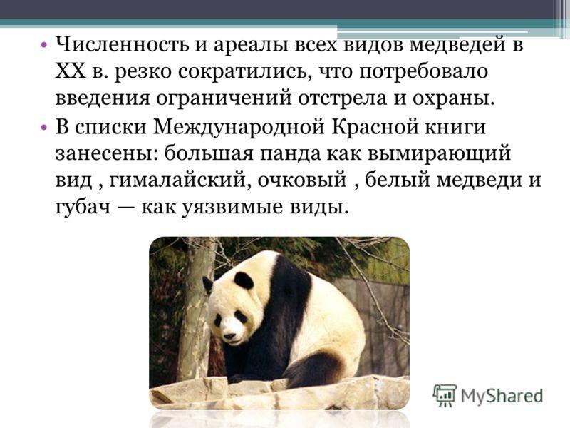 Численность и ареалы всех видов медведей в XX в. резко сократились, что потребовало введения ограничений отстрела и охраны. В списки Международной Красной книги занесены: большая панда как вымирающий вид, гималайский, очковый, белый медведи и губач к