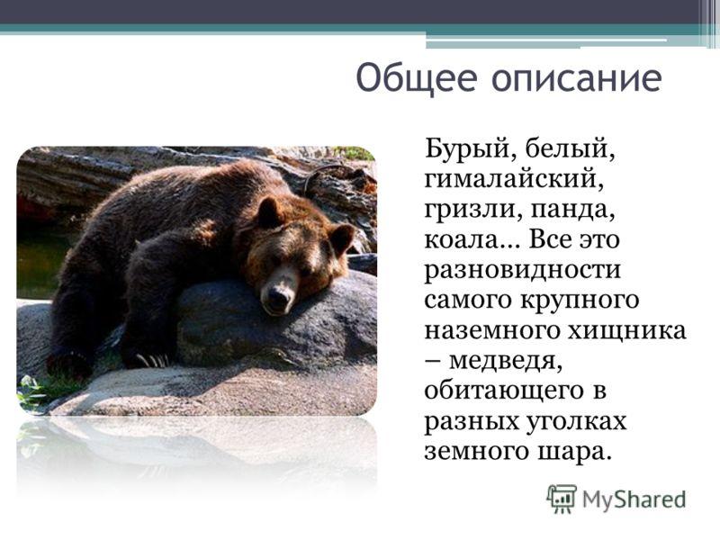 Общее описание Бурый, белый, гималайский, гризли, панда, коала... Все это разновидности самого крупного наземного хищника – медведя, обитающего в разн