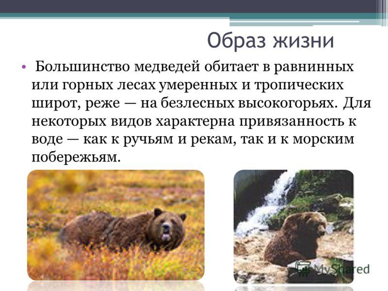 Образ жизни Большинство медведей обитает в равнинных или горных лесах умеренных и тропических широт, реже на безлесных высокогорьях. Для некоторых вид