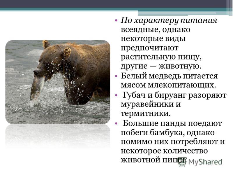 По характеру питания всеядные, однако некоторые виды предпочитают растительную пищу, другие животную. Белый медведь питается мясом млекопитающих. Губа