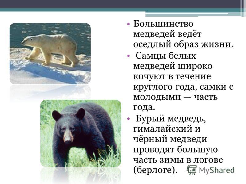 Большинство медведей ведёт оседлый образ жизни. Самцы белых медведей широко кочуют в течение круглого года, самки с молодыми часть года. Бурый медведь, гималайский и чёрный медведи проводят большую часть зимы в логове (берлоге).