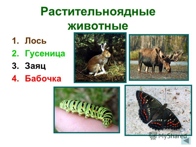 Растительноядные животные 1.Лось 2.Гусеница 3.Заяц 4.Бабочка