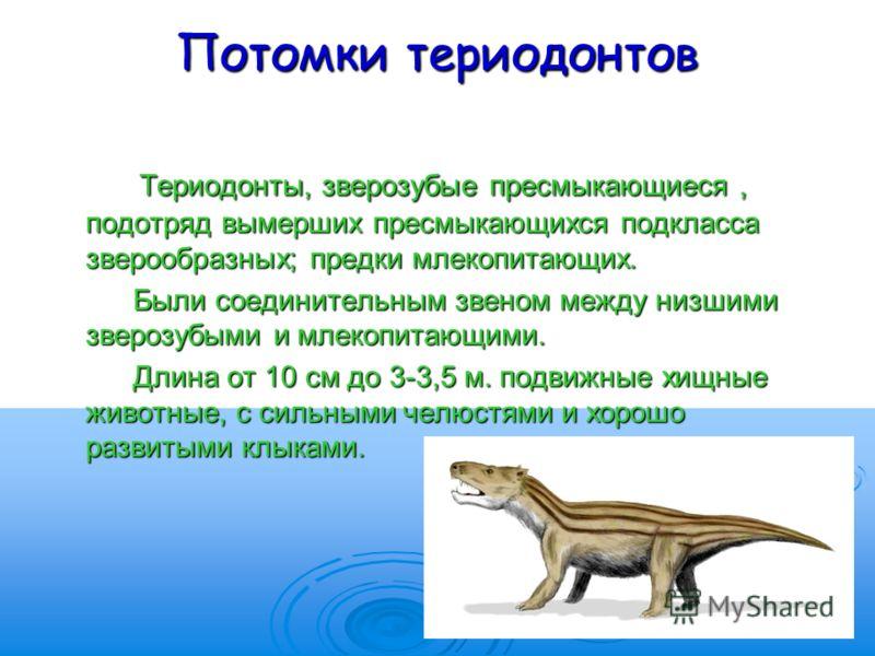 Потомки териодонтов Териодонты, зверозубые пресмыкающиеся, подотряд вымерших пресмыкающихся подкласса зверообразных; предки млекопитающих. Териодонты, зверозубые пресмыкающиеся, подотряд вымерших пресмыкающихся подкласса зверообразных; предки млекопи
