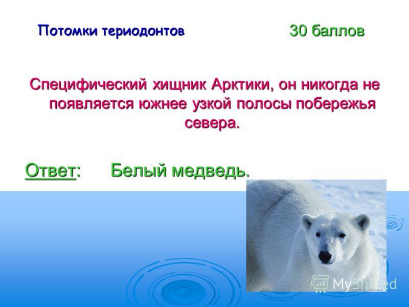 Потомки териодонтов Специфический хищник Арктики, он никогда не появляется южнее узкой полосы побережья севера. Ответ: Белый медведь. 30 баллов