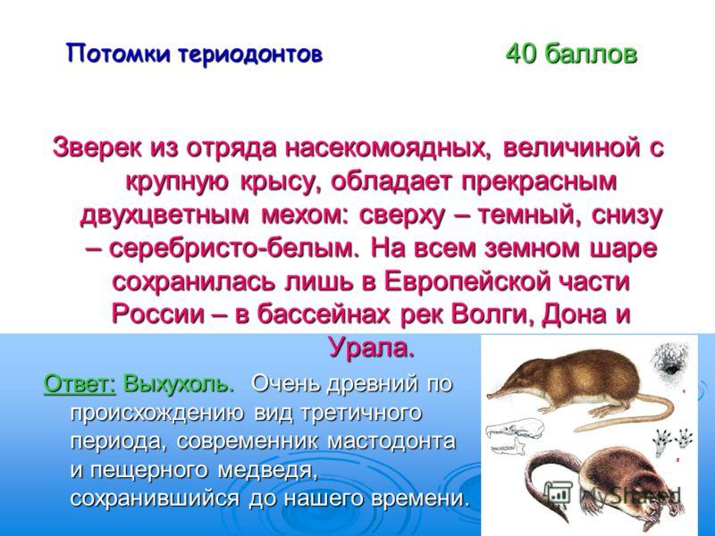 Потомки териодонтов Зверек из отряда насекомоядных, величиной с крупную крысу, обладает прекрасным двухцветным мехом: сверху – темный, снизу – серебристо-белым. На всем земном шаре сохранилась лишь в Европейской части России – в бассейнах рек Волги,