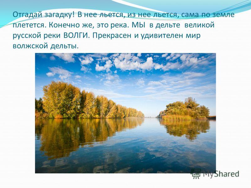 Отгадай загадку! В нее льется, из нее льется, сама по земле плетется. Конечно же, это река. МЫ в дельте великой русской реки ВОЛГИ. Прекрасен и удивителен мир волжской дельты.