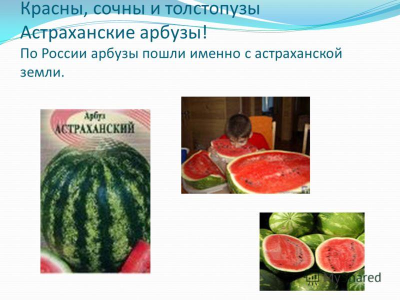 Красны, сочны и толстопузы Астраханские арбузы! По России арбузы пошли именно с астраханской земли.