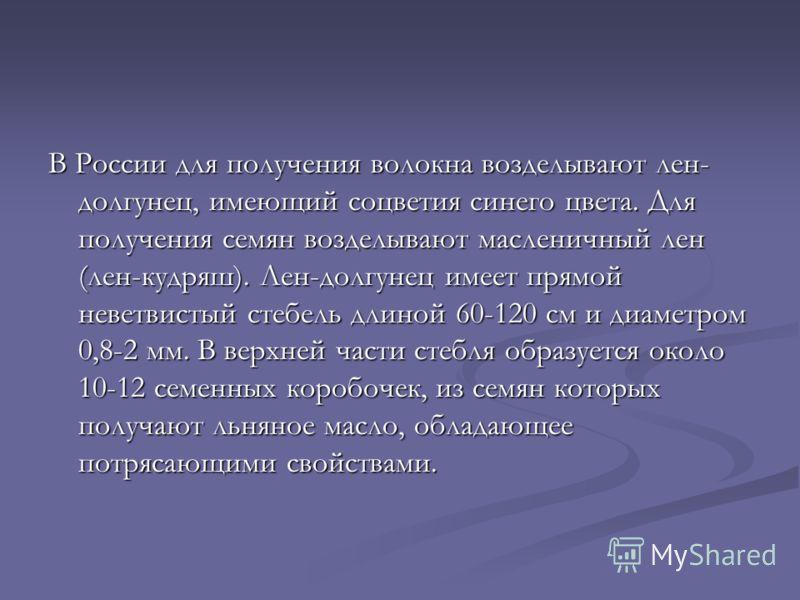 В России для получения волокна возделывают лен- долгунец, имеющий соцветия синего цвета. Для получения семян возделывают масленичный лен (лен-кудряш). Лен-долгунец имеет прямой неветвистый стебель длиной 60-120 см и диаметром 0,8-2 мм. В верхней част