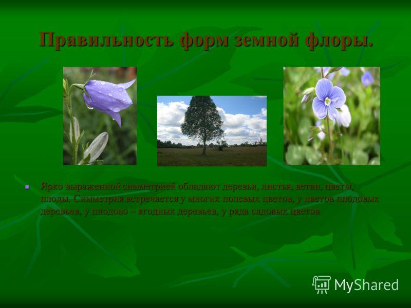 Правильность форм земной флоры. Ярко выраженной симметрией обладают деревья, листья, ветви, цветы, плоды. Симметрия встречается у многих полевых цветов, у цветов плодовых деревьев, у плодово – ягодных деревьев, у ряда садовых цветов. Ярко выраженной