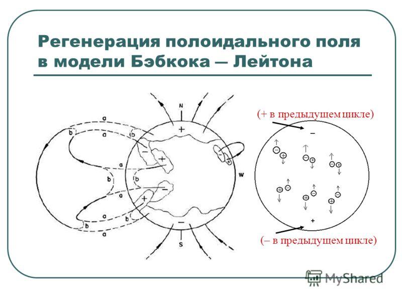Регенерация полоидального поля в модели Бэбкока Лейтона (+ в предыдущем цикле) (– в предыдущем цикле)