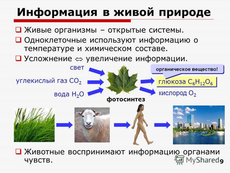 9 Информация в живой природе Живые организмы – открытые системы. Одноклеточные используют информацию о температуре и химическом составе. Усложнение увеличение информации. Животные воспринимают информацию органами чувств. фотосинтез глюкоза C 6 H 12 O