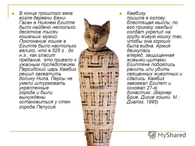 В конце прошлого века возле деревни Бени- Гасан в Нижнем Египте было найдено несколько десятков тысяч кошачьих мумий. Поклонение кошке в Египте было настолько велико, что в 525 г. до н.э., как гласит предание, это привело к ужасным последствиям. Перс