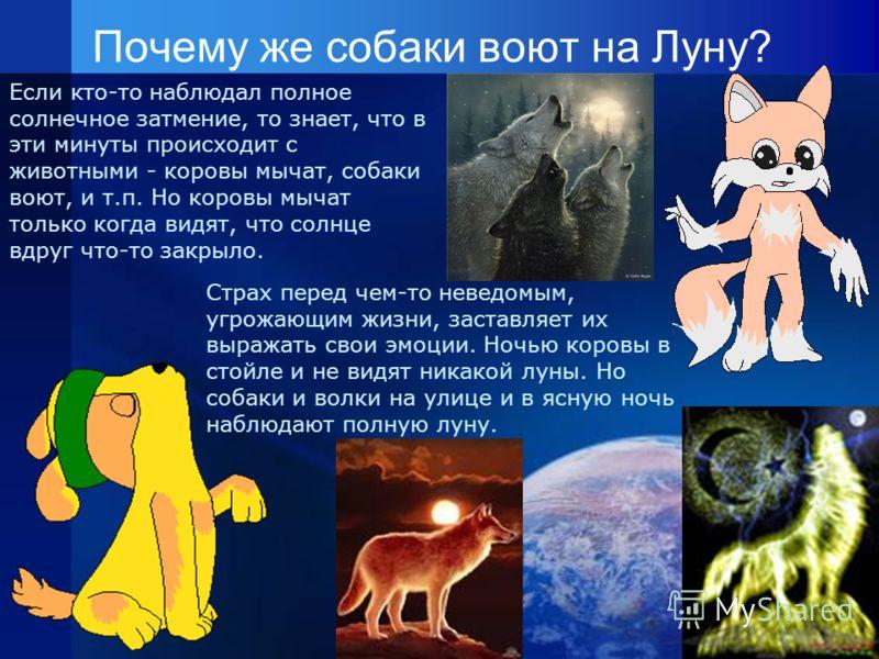 Почему же собаки воют на Луну? Если кто-то наблюдал полное солнечное затмение, то знает, что в эти минуты происходит с животными - коровы мычат, собаки воют, и т.п. Но коровы мычат только когда видят, что солнце вдруг что-то закрыло. Страх перед чем-
