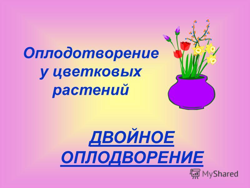 Оплодотворение у цветковых растений ДВОЙНОЕ ОПЛОДВОРЕНИЕ