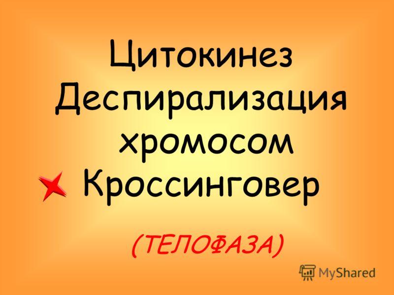 Цитокинез Деспирализация хромосом Кроссинговер (ТЕЛОФАЗА)