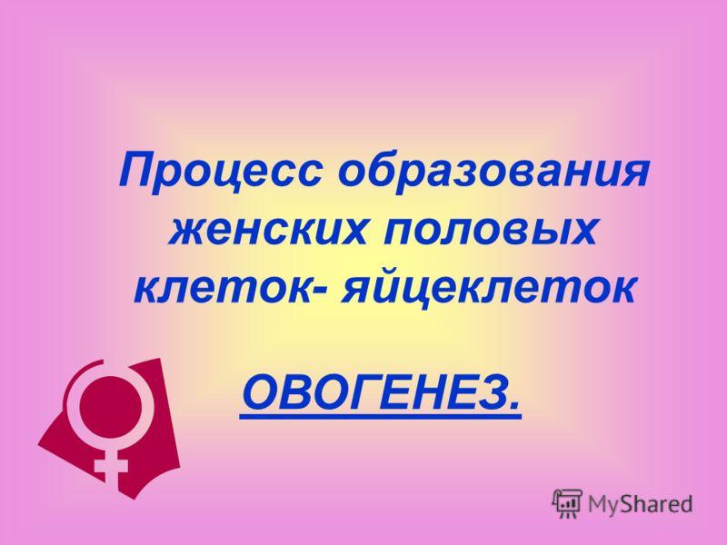 Процесс образования женских половых клеток- яйцеклеток ОВОГЕНЕЗ.