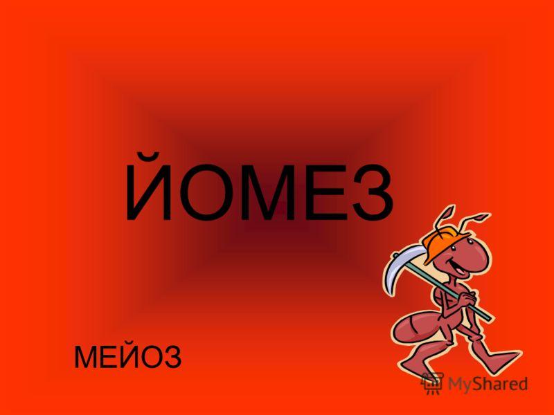 ЙОМЕЗ МЕЙОЗ