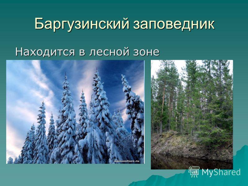 Баргузинский заповедник Находится в лесной зоне