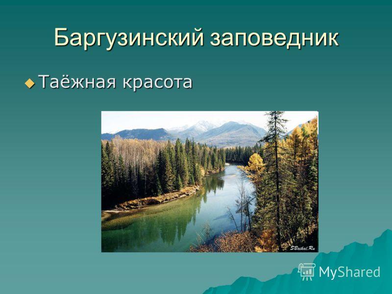 Баргузинский заповедник Таёжная красота Таёжная красота