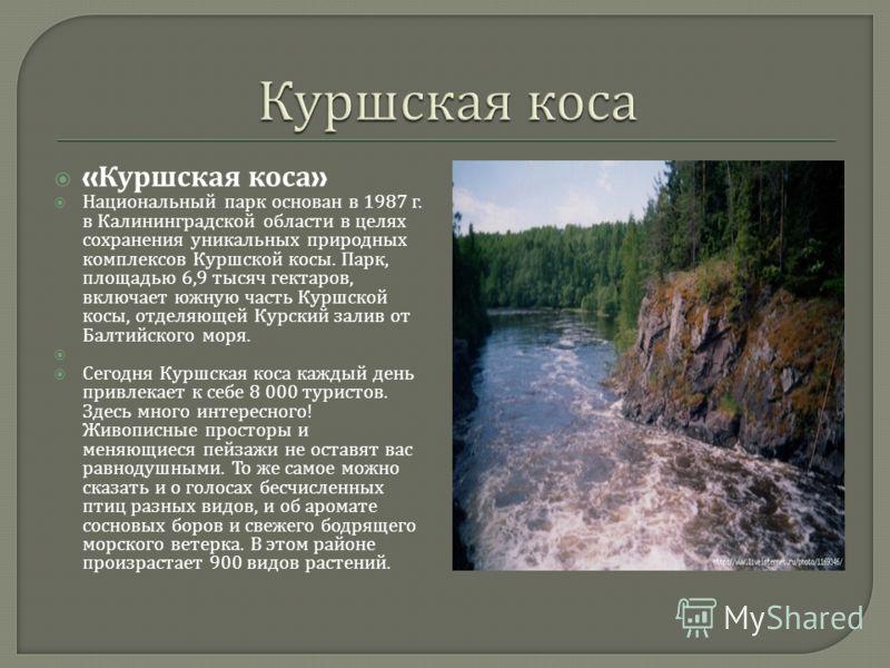 « Куршская коса » Национальный парк основан в 1987 г. в Калининградской области в целях сохранения уникальных природных комплексов Куршской косы. Парк, площадью 6,9 тысяч гектаров, включает южную часть Куршской косы, отделяющей Курский залив от Балти