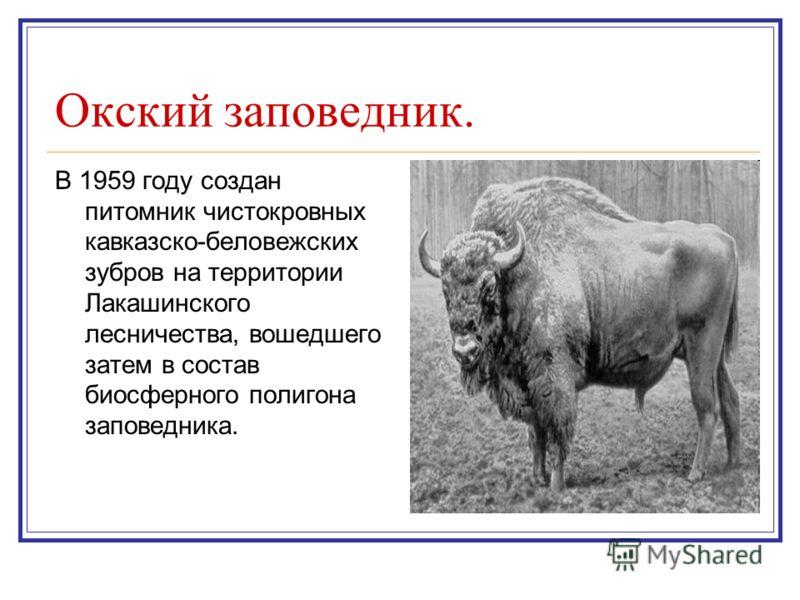 Окский заповедник. В 1959 году создан питомник чистокровных кавказско-беловежских зубров на территории Лакашинского лесничества, вошедшего затем в состав биосферного полигона заповедника.