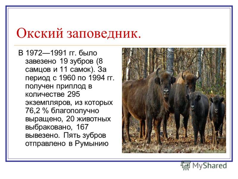 Окский заповедник. В 19721991 гг. было завезено 19 зубров (8 самцов и 11 самок). За период с 1960 по 1994 гг. получен приплод в количестве 295 экземпляров, из которых 76,2 % благополучно выращено, 20 животных выбраковано, 167 вывезено. Пять зубров от