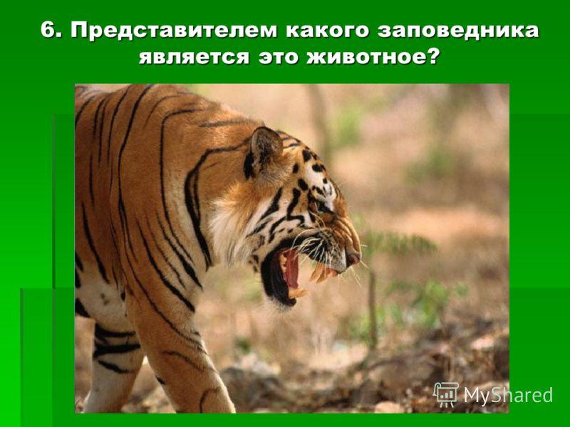6. Представителем какого заповедника является это животное?