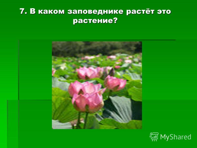 7. В каком заповеднике растёт это растение?