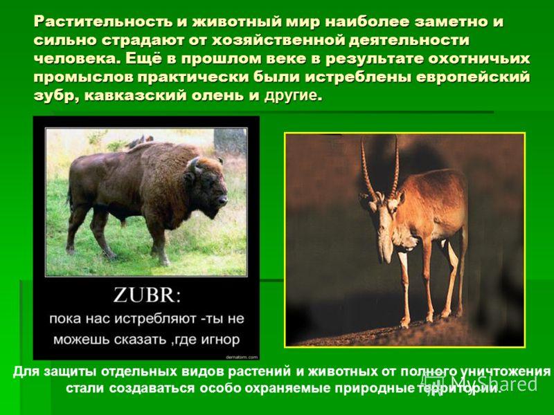 Растительность и животный мир наиболее заметно и сильно страдают от хозяйственной деятельности человека. Ещё в прошлом веке в результате охотничьих промыслов практически были истреблены европейский зубр, кавказский олень и другие. Для защиты отдельны