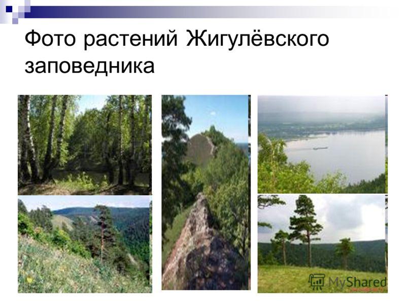 Фото растений Жигулёвского заповедника