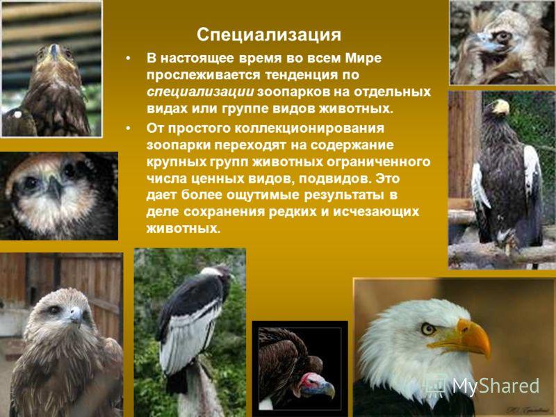 Специализация В настоящее время во всем Мире прослеживается тенденция по специализации зоопарков на отдельных видах или группе видов животных. От простого коллекционирования зоопарки переходят на содержание крупных групп животных ограниченного числа