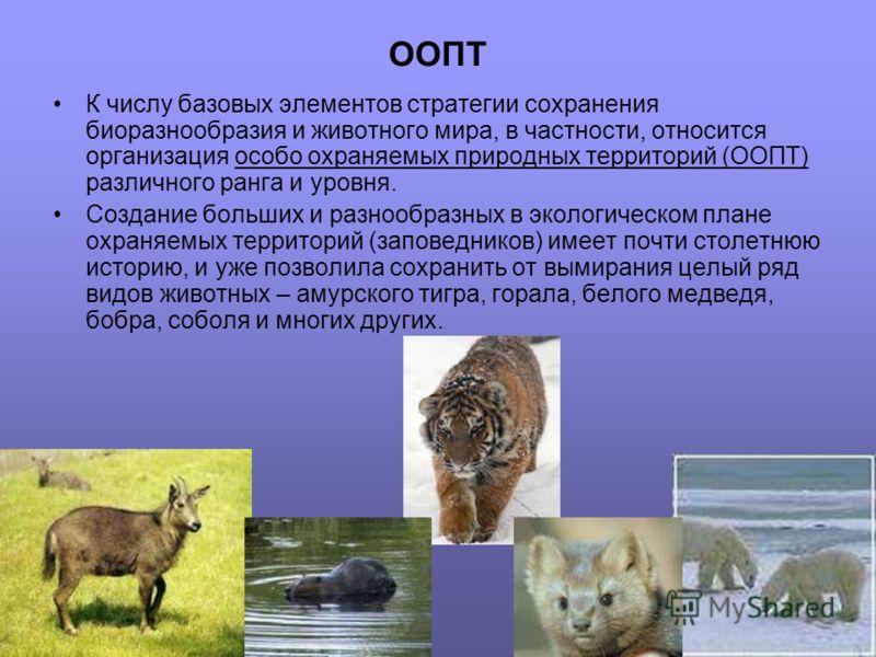 ООПТ К числу базовых элементов стратегии сохранения биоразнообразия и животного мира, в частности, относится организация особо охраняемых природных территорий (ООПТ) различного ранга и уровня. Создание больших и разнообразных в экологическом плане ох