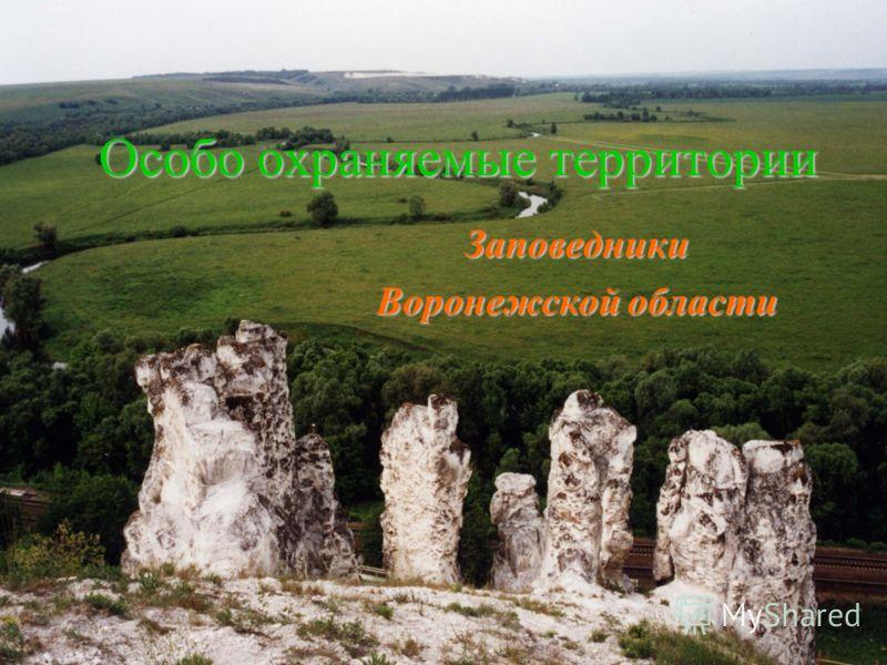 Особо охраняемые территории Заповедники Воронежской области